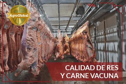 Calidad de Res y Carne Vacuna