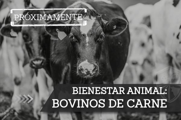 1-Bovinos-de-Carne