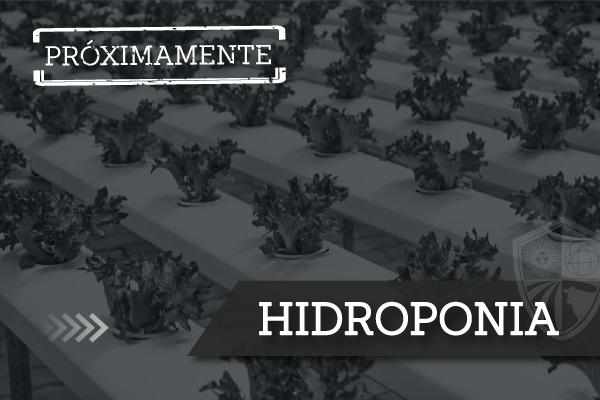 2-Hidroponia