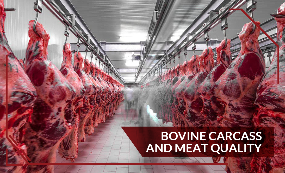Bovine Carcass and Meat Quality